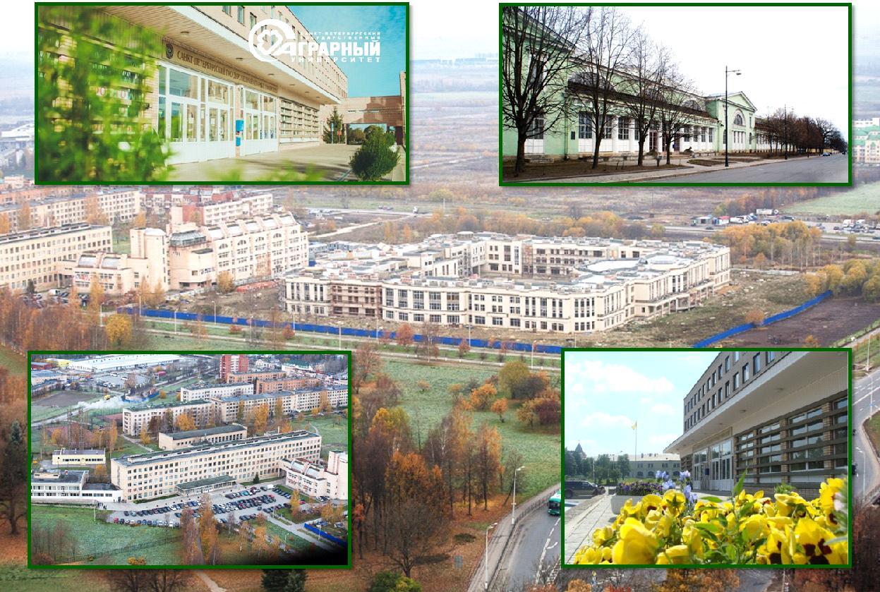 universitatea s.peterburg